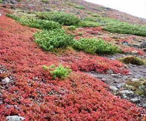 紅葉 北海道
