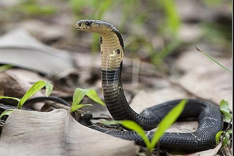 蛇の道は蛇の意味とは?由来や使い方、類語もチェック! | お ...